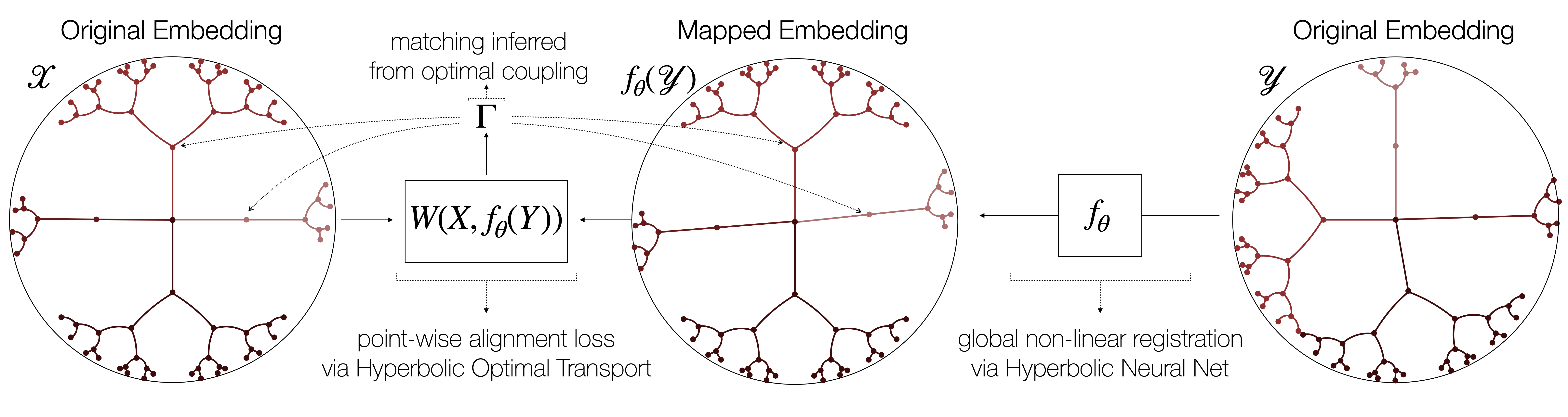 Schematic representation of the proposed approach. A deep network globally registers the two hyperbolic embedding spaces (X and Y) by correcting for non-linear branch permutations, so that source and mapped target points can be aligned using a hyperbolic variant of Wasserstein distance. Training is done end-to-end in a fully unsupervised way – no prior known correspondences between the hierarchies are assumed.